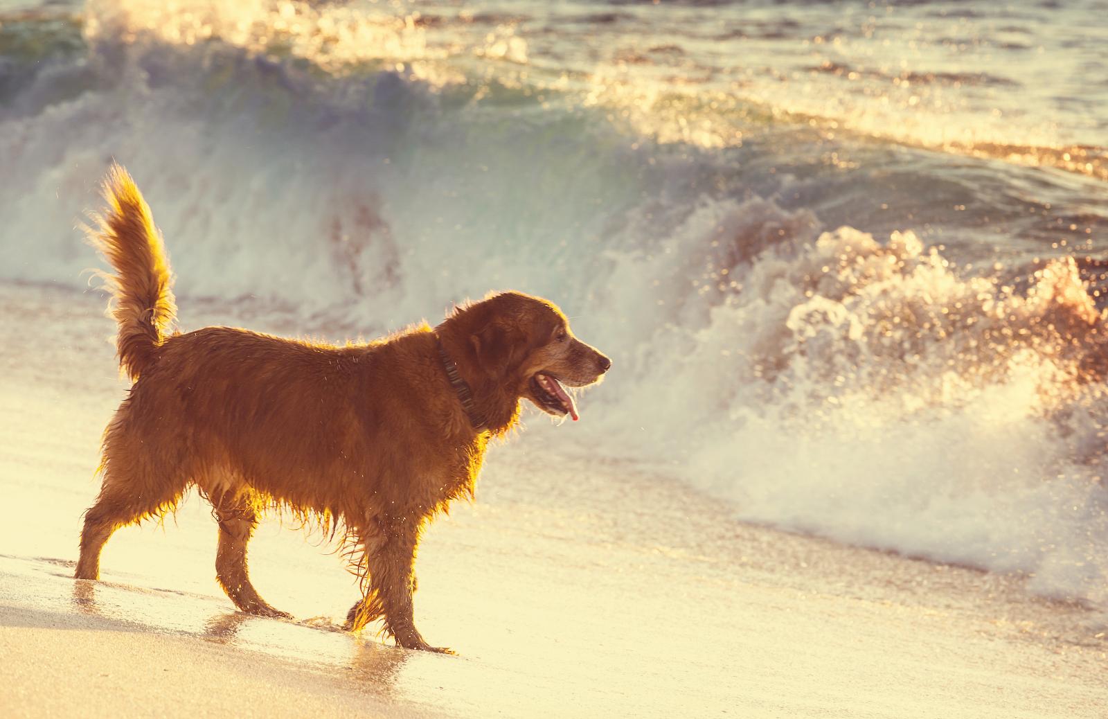 Mit gutem Hundefutter hat man einen glücklicheren Hund